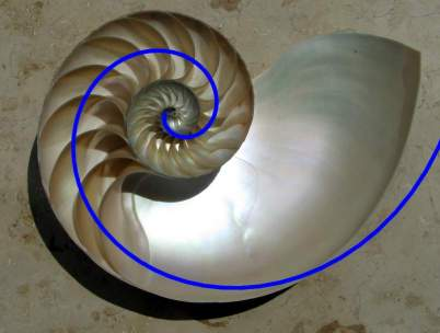 Fibonacci Spiral and Mayan concept of time cycles