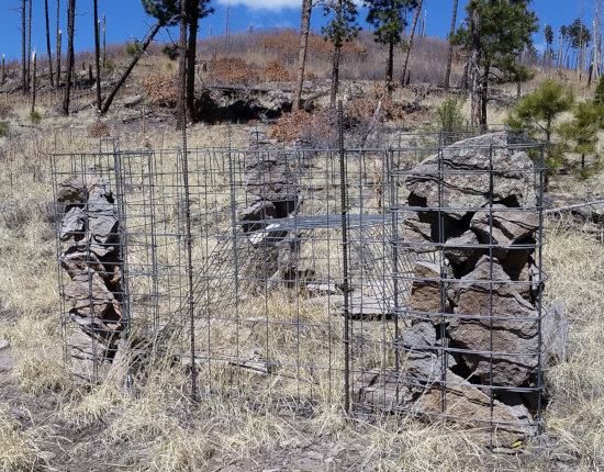 [Inexplicable cage with gabion]