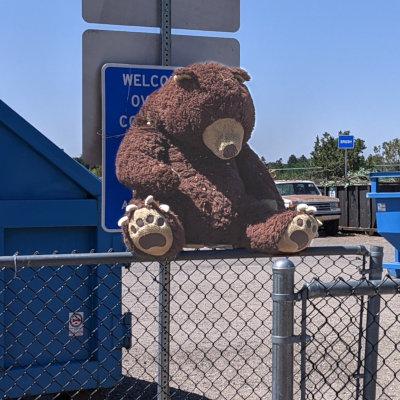 [teddy bear at the White Rock dump]