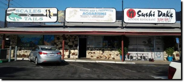 [3 adjacent stores: Scales 'n' Tails, Aquarium supplies, and Sushi Dake]