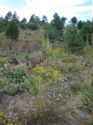 [Wildflowers on the Quemazon trail]