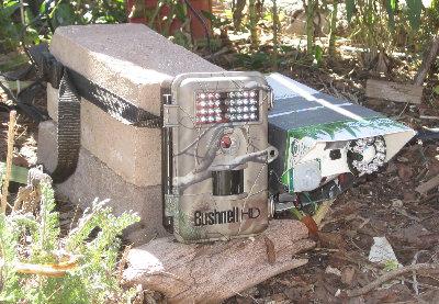 [Bushnell Trophycam vs. Raspberry Pi Crittercam]