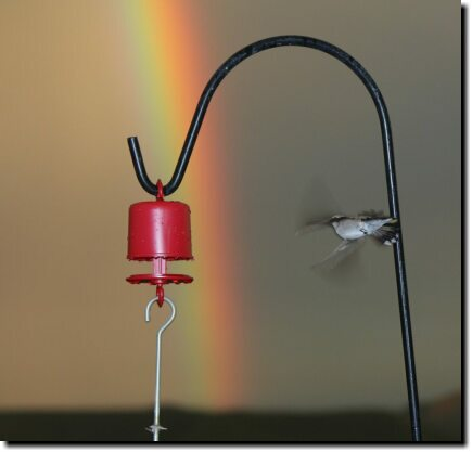 [Hummingbird and rainbow]